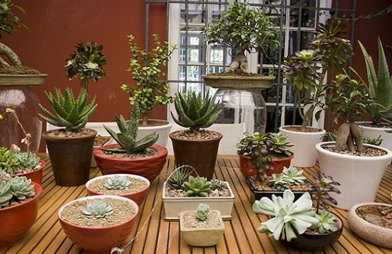 Las mejores plantas de interior para decorar puranoticia for Decoracion de interiores y exteriores