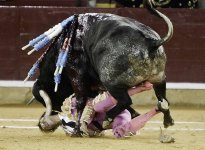 Video: Torero recibe brutal ataque de un toro en Valencia